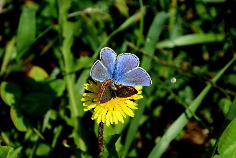 Farfalle di benny48