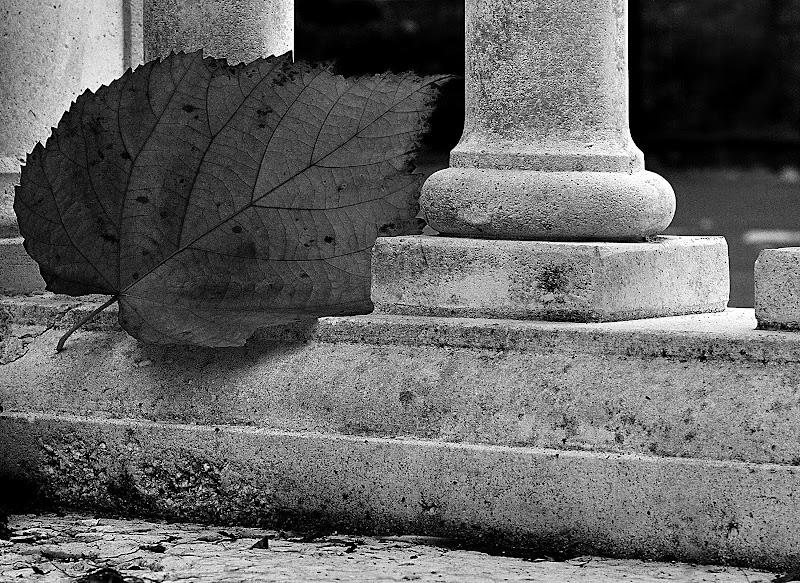 Fuggevole... di R. Depratti