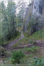 Photo: mäßig steil geht's es durch den Wald auf gutem Weg höher