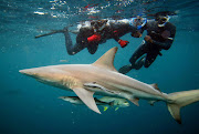 Sowetan's picture editor, Darryl Hammond, recently went shark cage diving at Rocky Bay, on the south coast.