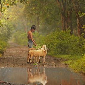 sheeps & the boy by Jayadi Salim - Babies & Children Children Candids