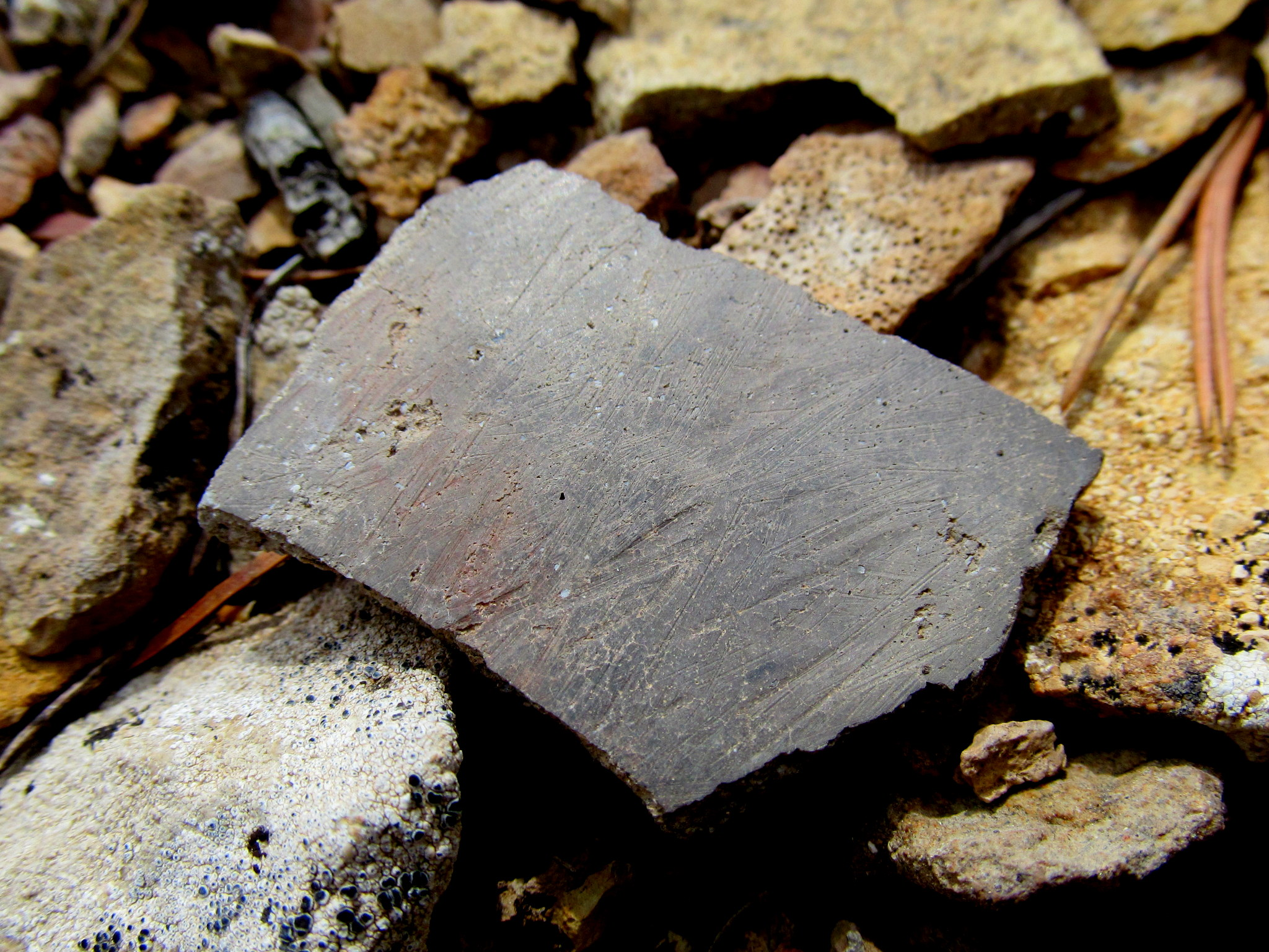 Photo: Texture on a plain gray potsherd