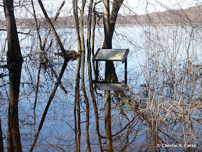 "Photo: Edge Trail, ""wetlands"" overlook"