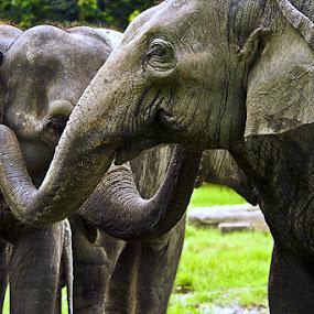 Gossip by Soumen  Basu Mallick - Animals Other Mammals