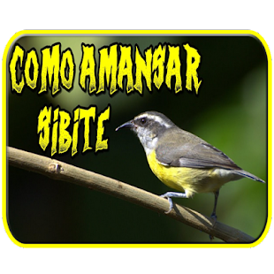 canto do pássaro sibite - náhled