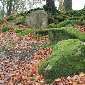 Sleeping Dinosour by Morgan Bardon - Landscapes Caves & Formations ( rock, cloghleagh, moss, dinosaur, formation, wicklow, ireland )