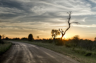 Photo: Turn Away  This shot is another from Kruger Nation Park (near Lower Sabie). Before we left on the trip I think my expectation at Kruger was to be able to go out and shoot sunsets/sunrises every day from all kinds of cool locations...unfortunately that wasn't the case. It's interesting how being in a wild animal park that there are actually pretty strict rules about when you can and cannot be out about in the park. In the Summer at Kruger the gates to the park were only open from 5:30am - 6:30pm which was exactly an hour after and before sun break...which was pretty inconvenient for a Low-Sun Chaser.  However, each camp we stayed at offered several types of morning/evening drives and at Lower Sabie we did a sunset drive which in my opinion is the best way to go. We got to set out at 6pm and were out for 3 hours which allowed us to watch the sun die (which was amazing this evening BTW). We also got to drive around for the last half of the drive in the dark with flashlights scanning for animals. One of the most amazing parts of this drive in particular was when our guide stopped us in the pitch black under a full moon and turned off the engine allowing us to hear all the sounds of the park. It's kind of something you have to experience yourself to understand how truly amazing this park is.  Processing: Nikon D7000   Nikon 28-70mm   Lightroom   Photomatix   Photoshop