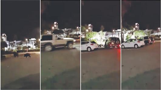 Capturas del vídeo grabado en Mojácar Playa que se convirtió en viral.
