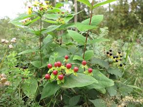 Photo: September berries