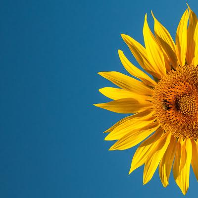 Petalosamente giallo di emanuela_terzi