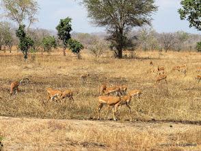 Photo: gazzelle