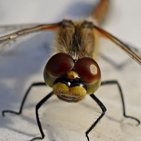 by Camilla Nilhammer - Animals Insects & Spiders
