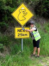 Photo: Year 2 Day 147 -  Cuddle a Koala