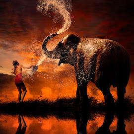 by Caras Ionut - Digital Art People ( water, orange, tutorials, reflection, splash, elephant, sparkle, hard day, leaf, smoke, manipulation, playing, girl, tree, splashing, sunset, mounting )