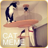 Cat Meme Picture