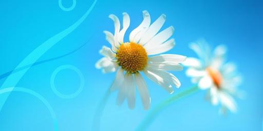 Blue Daisy Theme