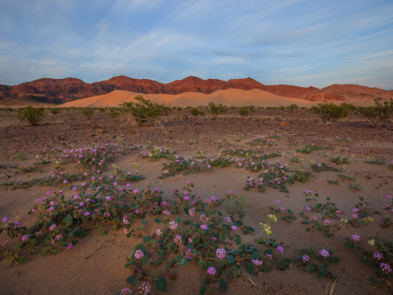 """Photo: 2017 Death Valley Photography Workshops So far I'm planning two trips for spring wildflowers, two for fall: Mar 1 - 5 - Death Valley Spring Landscapes & Night Photography Mar 22 - 26 - Death Valley Spring Landscapes & Night Photography Nov 16 - 19 - Death Valley Landscape & Night Photography - Leonid Meteor Shower  Dec 9 - 13 - Death Valley Landscape & Night Photography - Geminid Meteor Shower  Here's my Death Valley workshop overview page: http://www.jeffsullivanphotography.com/blog/death-valley-photography-workshop-2013/  I'll get a blog post up shortly with info on the ones in March, and add that link here. I live 3 hours from the park, and I've been exploring Death Valley several times per year for eleven years! If you can't join me but want to explore the park, my 320-page guidebook """"Photographing California Vol. 2 – South"""" includes 40+ locations in Death Valley.  #deathvalley  #photographyworkshops www.JeffSullivanphotography.com"""