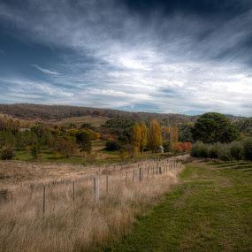 Lavandula by Brett Florence - Landscapes Prairies, Meadows & Fields