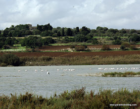 Photo: Flamingoes and the countryside around Vendicari Wetlands