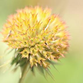 Little Flower by Angela Wescovich - Flowers Flowers in the Wild