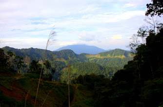 Photo: Year 2 Day 115 -  View of the Cameron Highlands on the Way Up on the New Road