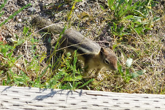 Photo: Dulce saw this little guy on the Geyser Hill Trail