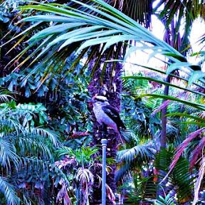 オーストラリアへ旅行したら探してみたい!都市部でも観察できる日本では見ることのできない野鳥や動物たち