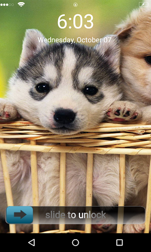 Cute Puppies 3d Locker Theme