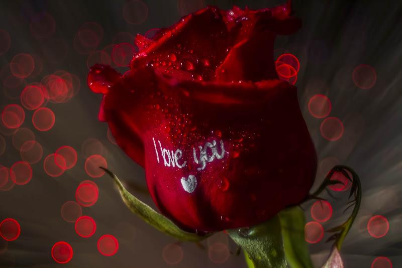 the love flower di Cinzia_torelli