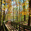 Walkway through park by Paul S. DeGarmo - Buildings & Architecture Bridges & Suspended Structures ( wakway, wood, park, fall, view,  )