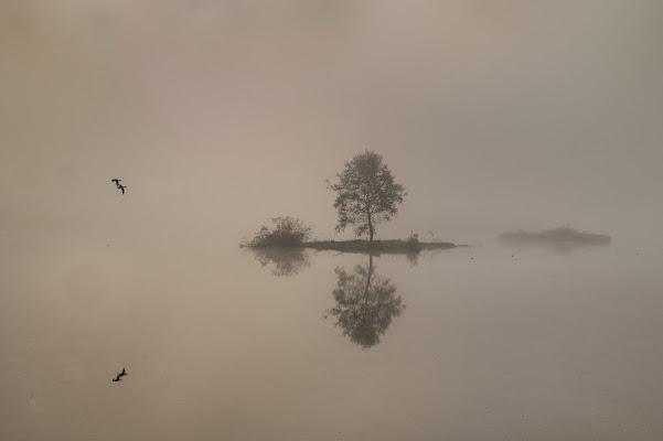 Dentro la nebbia di si