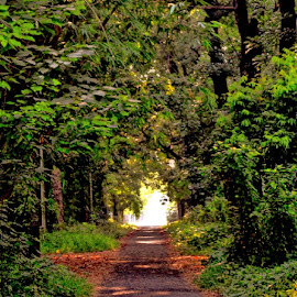 The Way To Paradise by Sumita Mehera - Landscapes Travel