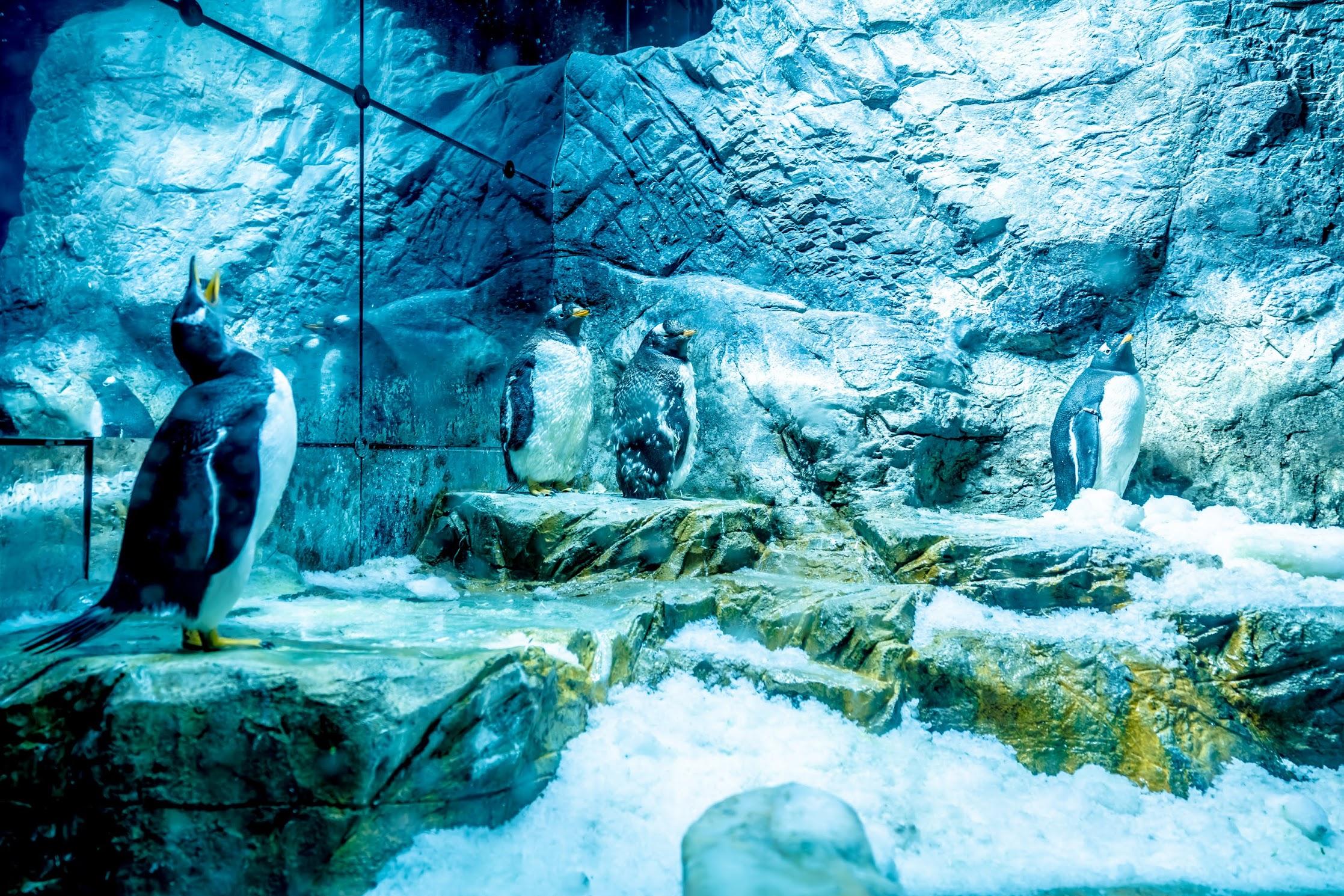 海遊館 ペンギン1