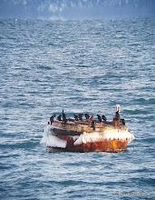 Photo: Pelagic Cormorants on an icy buoy in Kachemak Bay