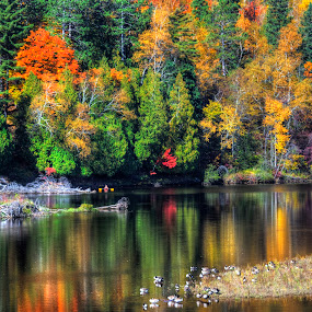 Floating on a palette of color by Marilyn Magnuson - Landscapes Waterscapes ( colors on river, kayaking in fall, geese on fall river, fall, fall reflections )