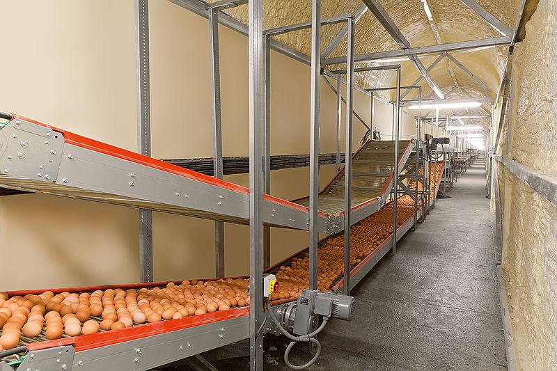 kiaušinių transportavimo sistema Curve Conveyors