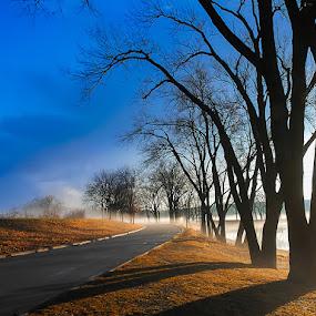 by Qing Zhu - Landscapes Weather ( foggy, winter, blue, fog, trees, weather, road, landscape, city park, misty )