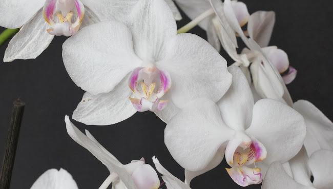 Orchidee Terrarium bepflanzen gießen pflegen