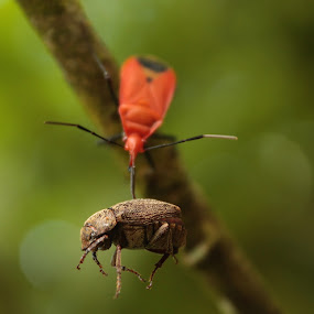 by Pelukis Badai - Animals Insects & Spiders