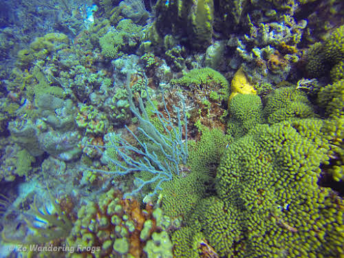 Bonaire Dive Sites // Healthy Coral