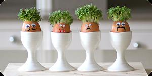 egg cress