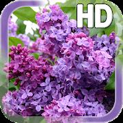 Lilac Flower LWP