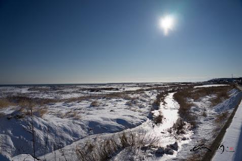 凍る河、そして太陽の雫。。。