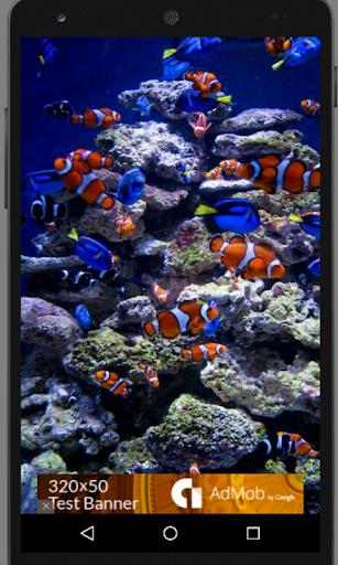 Ocean Fish Beauty