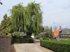 Photo: Treurwilg, begraafplaats Heinenoord