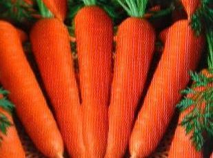 CHOOSE:Carrots that are firm, smooth, evenly shaped, and have a bright orange color.Do not...