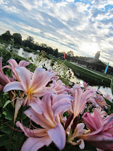 Photo: Pink flowers overlooking a dawn over a pond at Cox Arboretum in Dayton, Ohio.