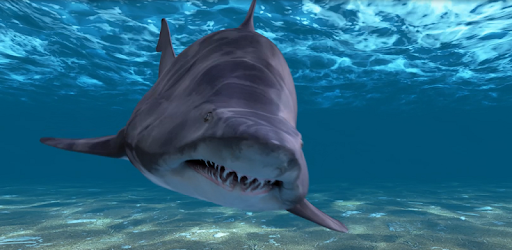 Descargar Shark Attack Live Wallpaper Para Pc Gratis