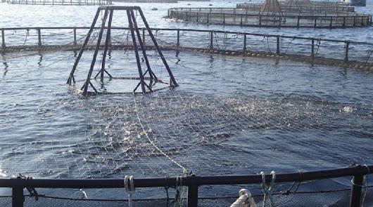 Nuevas ayudas por valor de 685.000 euros a la acuicultura