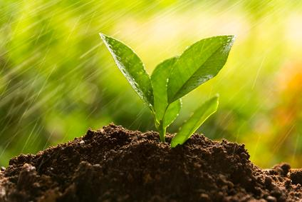 planting tree, sprout